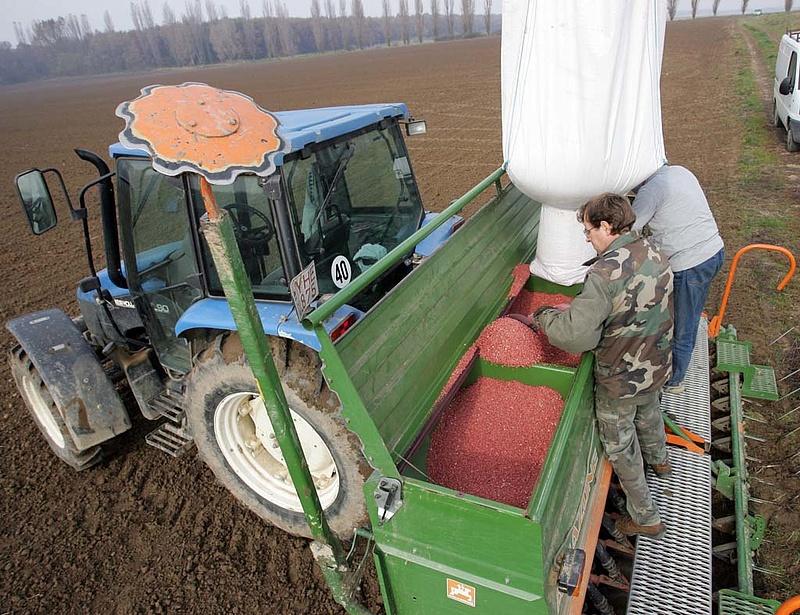 Nyilvánosak a kukoricakísérleti eredmények