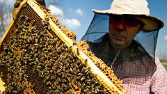 Mézet exportálunk Kínába