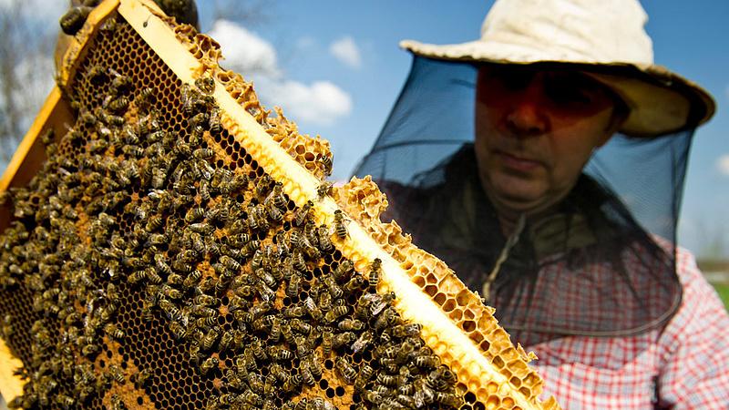Nagy tételben csaltak a mézzel