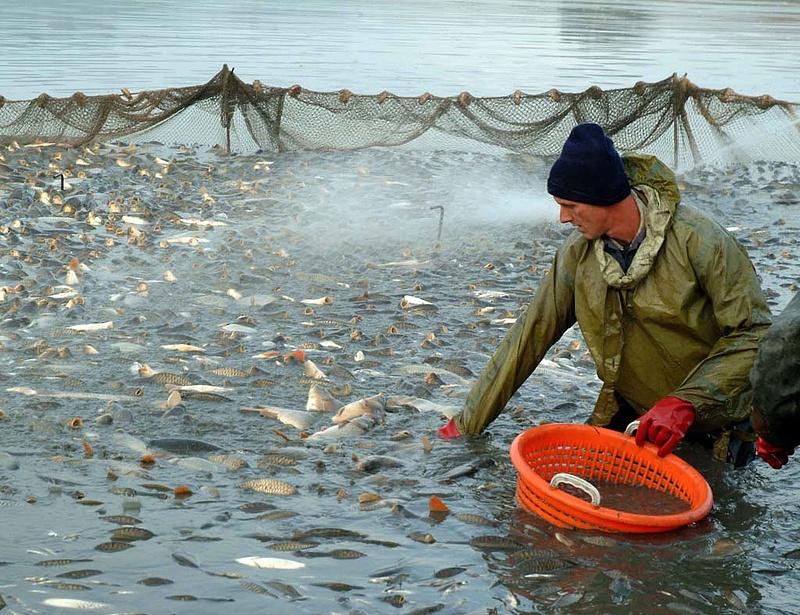 Várhatóan megugrik a halászat támogatása - új tavak is születhetnek