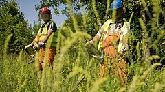 Lesújtó számok a közmunkásokról - erre nem lesz büszke a kormány
