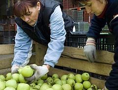 Heti kétszáz forintból ehetnek gyümölcsöt a gyerekek