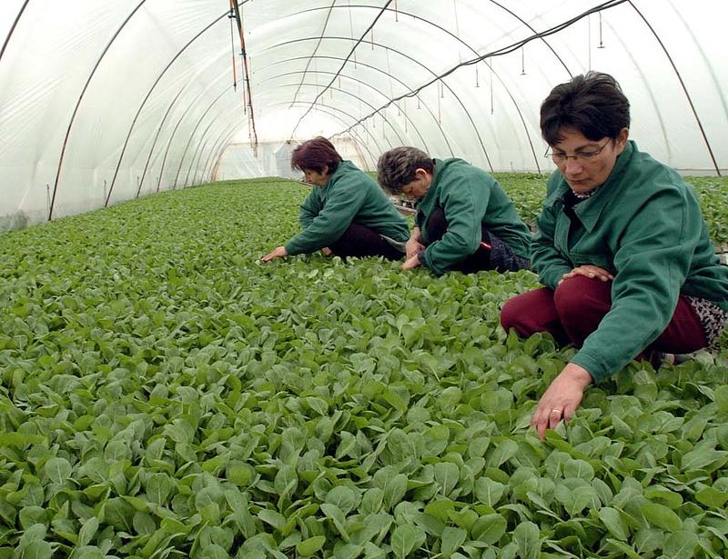 Esélyt kapnak a magyar kertészek