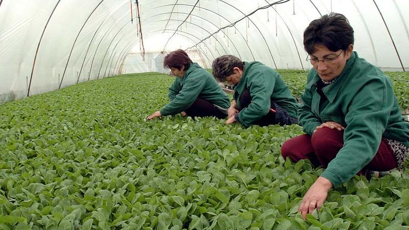 Megtalálták a mezőgzadasági fóliahulladékok hasznosítására a megoldást Magyarországon