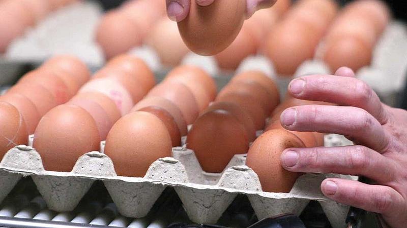 Rovarirtós tojásokat találtak Szlovéniában is