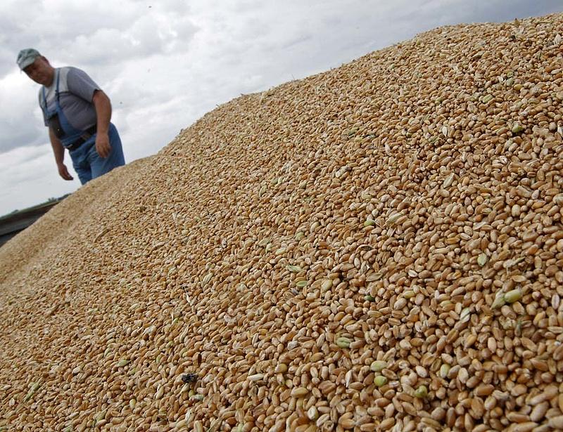A gabona húzta az agrárexportot