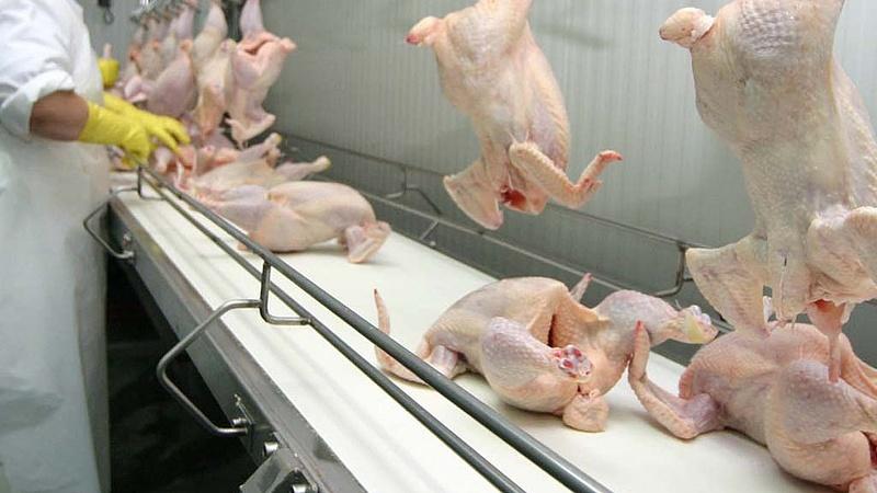 Csak gratulálni lehet a magyar csirkehúsnak