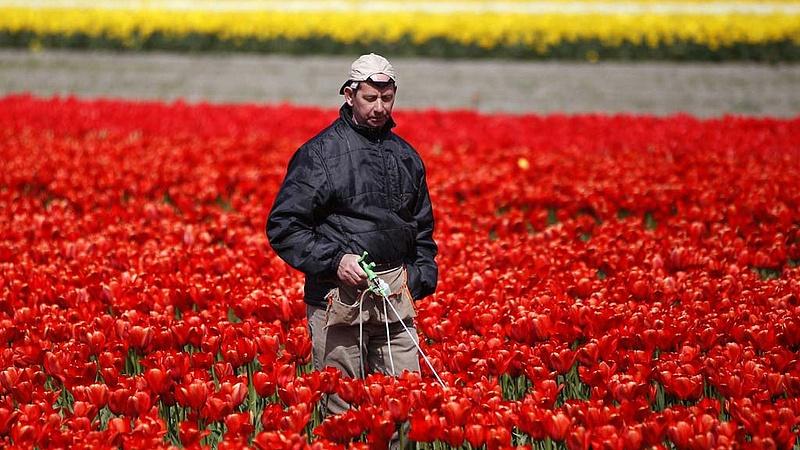 Óriási sikkasztás volt a virágpiacon