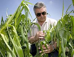 Lehet kérni az agrárkárt enyhítő pénzeket