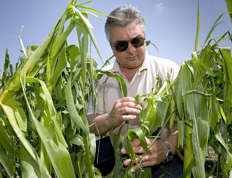 Felszámolnak egy növénybiztosítót, májusig várják a követeléseket