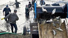 Változás érkezik a Balatonnál - örülhetnek a horgászok