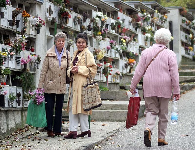 Több mint 20 millió szál krizantém kerül a temetőkbe