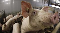 Elszállt a sertéshús és a cukor ára