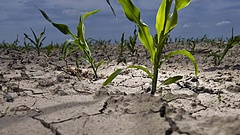 A klímaváltozásra készítik fel a magyar mezőgazdaságot