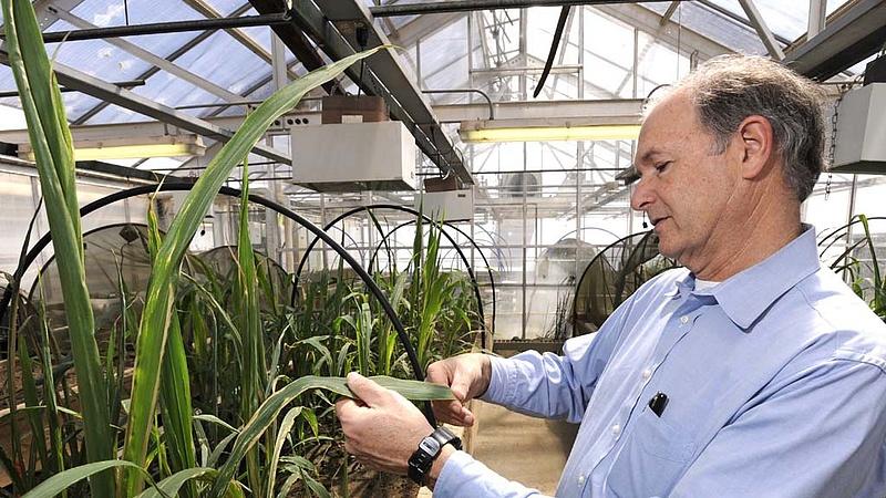 GMO-mentes marad Magyarország