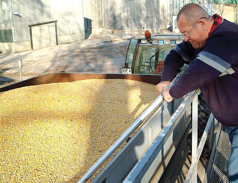 Elkezdhet felfelé kúszni a kukorica ára