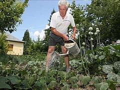 Meglepő dolog derült ki a nyugdíj előtt állókról