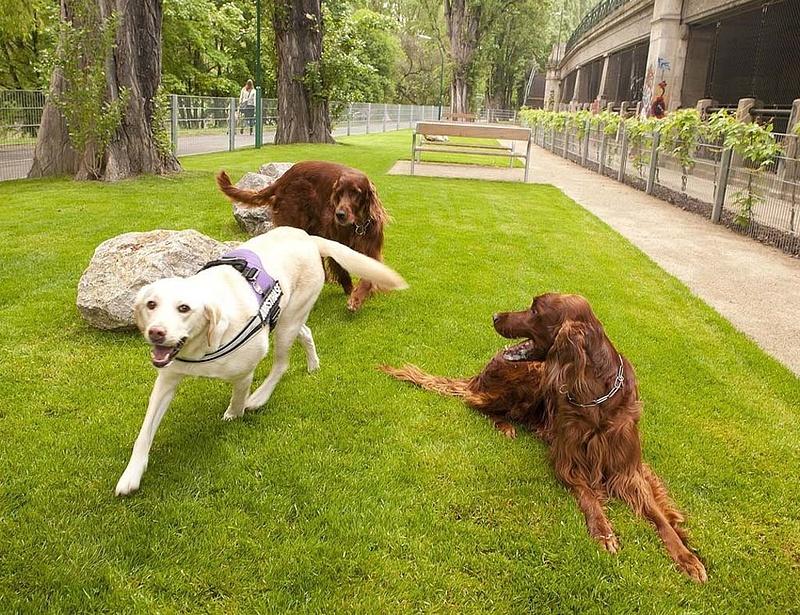Kutyával nyaralna, utazna? - Változások jönnek