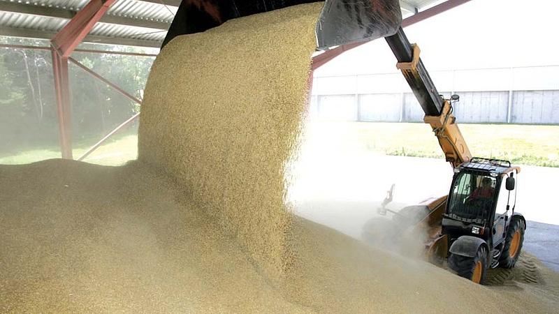 Drágult a búza és a kukorica, nőtt a gabonaexport