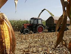 Komoly kukoricadrágulást szeretnének a gazdák