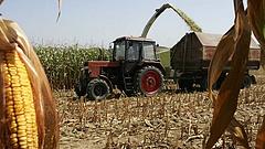 Megugrott a kukorica ára