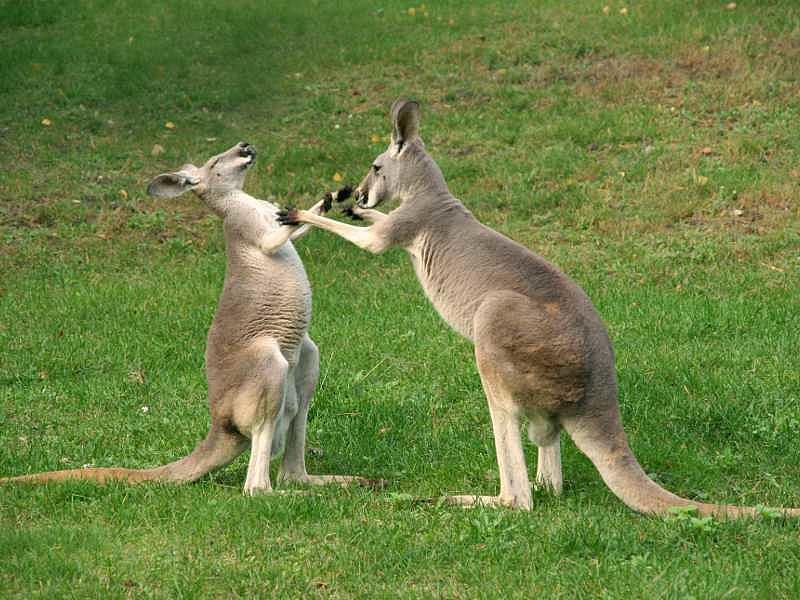 Kiütötték az ausztrál dollárt