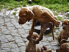 Megjött a kutyarendelet - fontos döntést hozott a kormány