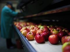 EBRD: az orosz importtilalom csökkentheti a magyar növekedést is