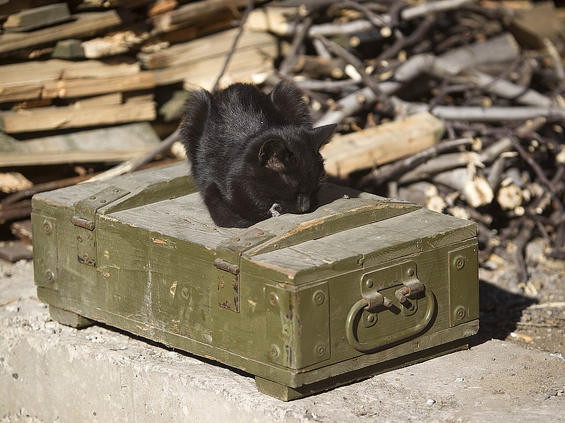 Állatkísérletek - fontos döntést hozott a EB