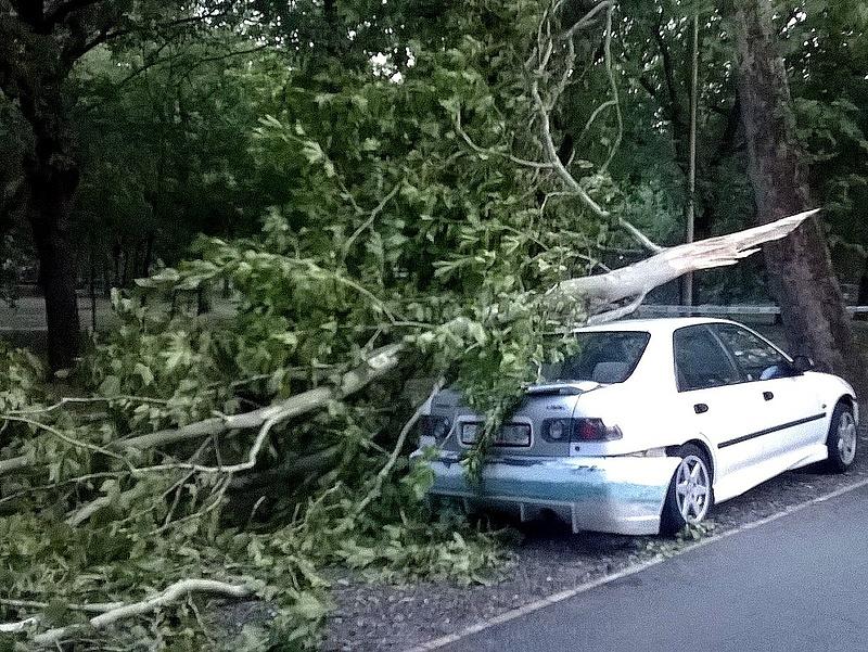 Ki fizeti a kidőlt fa által okozott autókárt?