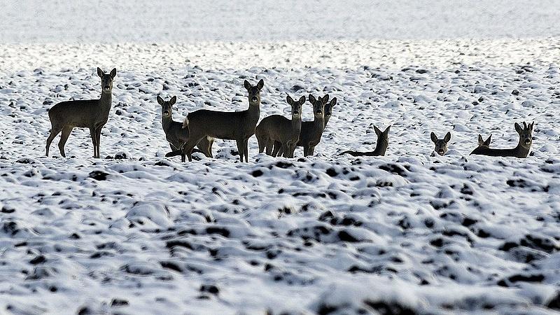 Itt a döntés: félmilliárddal támogatják a vadászokat