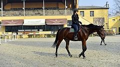 Megvan, ki újítja fel a Nemzeti lovardát (frissített)