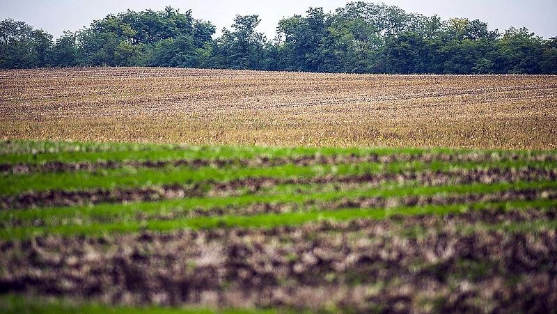Kiderül, hogy teljesített a mezőgazdaság