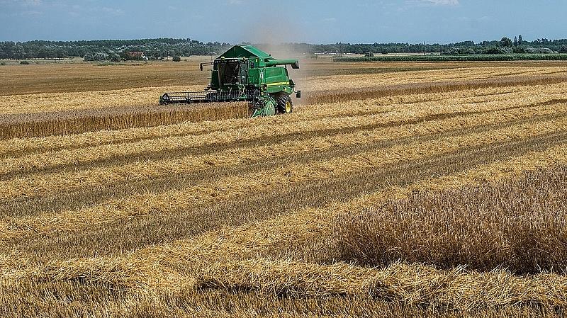 Nagyban zajlik az aratás - erre számít a miniszter