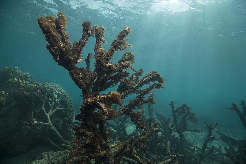 Egyre nagyobb a baj az ausztrál Nagy-korallzátonynál