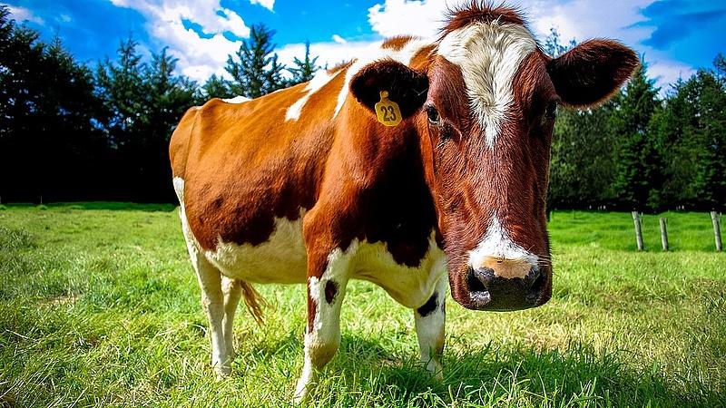 Emelkedik a tej ára? - Itt az előrejelzés