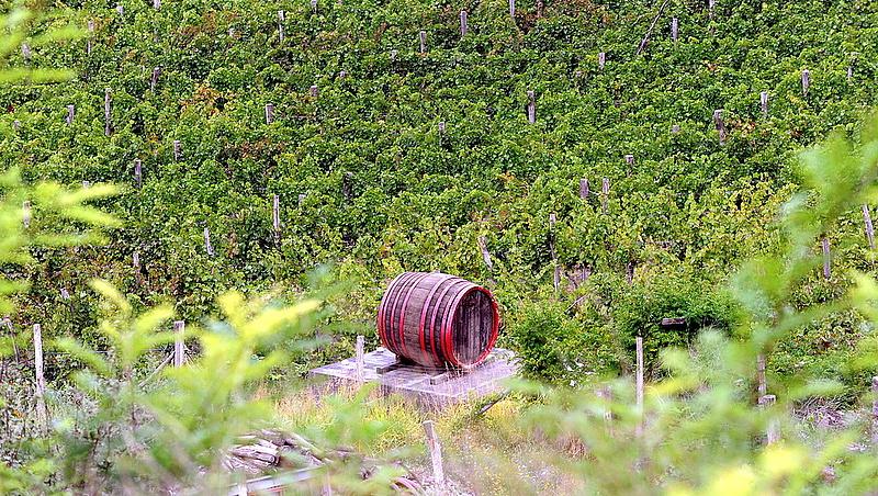 Óriási fölénybe kerültek a magyar borok