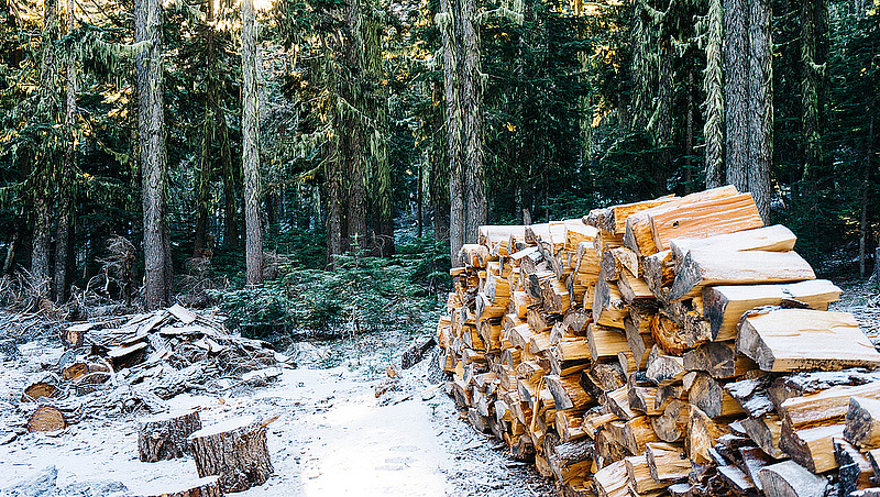 Összefogás kellene az erdőirtás megállítása érdekében