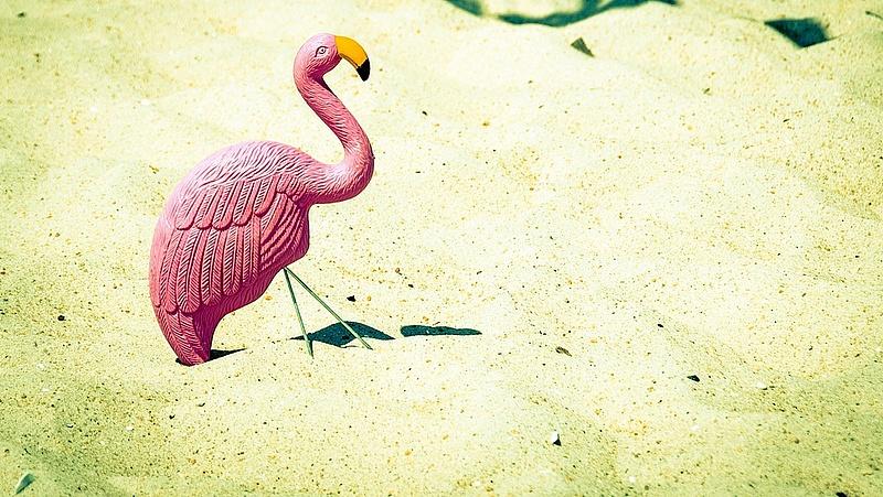 Kavalkád jön Budapesten: kotlanak a flamingók