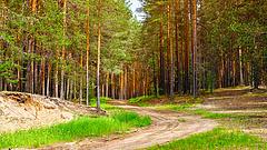 Látványos változások jönnek az erdőkben