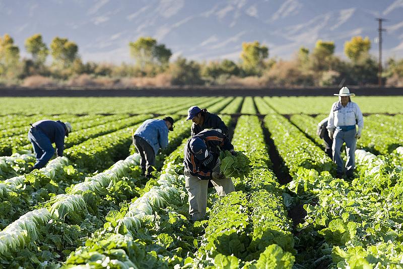 Orosz embargó: fellélegezhetnek az európai gazdák