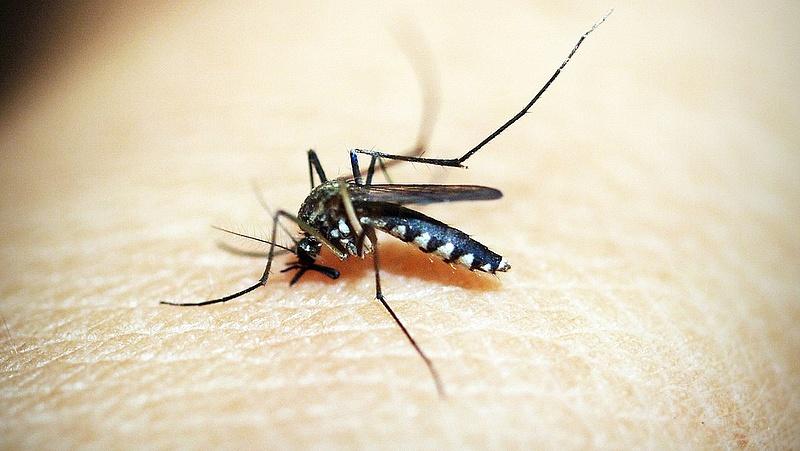 Az időjárás kedvezett a szúnyogoknak