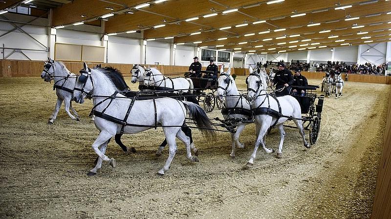 Orbán: szeretjük a lovainkat