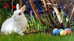 Húsvéti rohamra készülnek a boltok