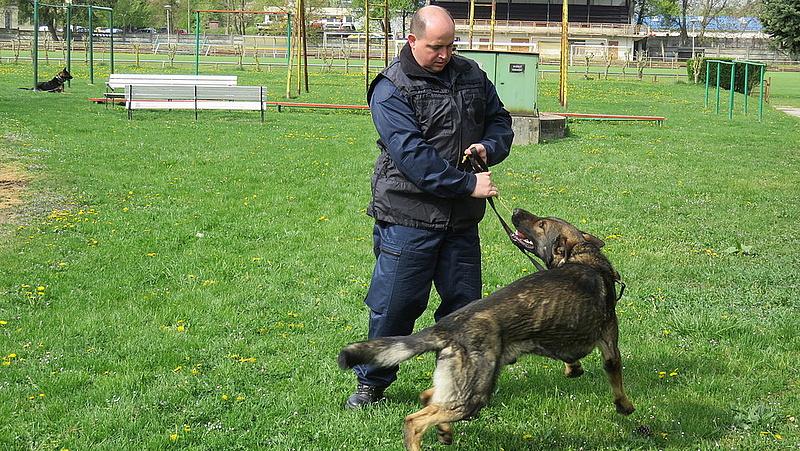 Nagy hasznot hajtanak a NAV szolgálati kutyái