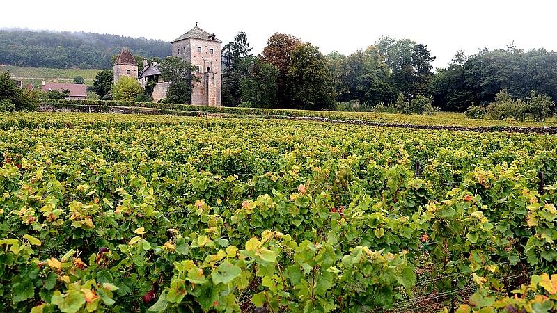 Egymástól lopkodják a szőlőt a borászok