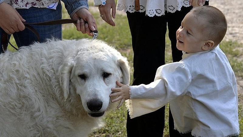 Mit tervez a kutyákkal a kormány?
