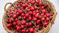 Nagy a baj a magyar cseresznyetermesztéssel