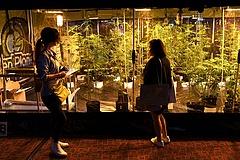 Döntöttek az olaszok a light marihuánáról