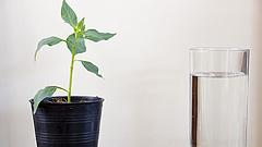 Hotel nyílt szobanövényeknek